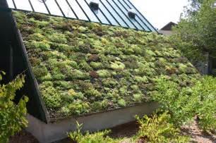 Green Roof Vegetable Garden