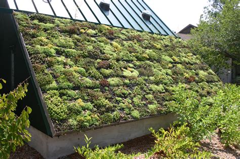 roof garden plants green roofs a useful solution to embellish our home and live better