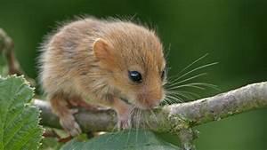 Wie Fängt Man Eine Maus : tiere im wald tierwelt tierwelt natur planet wissen ~ Markanthonyermac.com Haus und Dekorationen