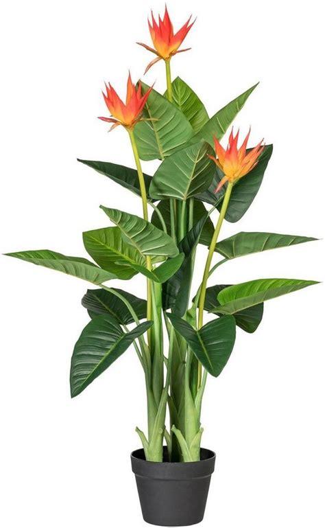 Zimmerpflanze Orange Blüte by K 252 Nstliche Zimmerpflanze 187 Guzmania 171 X3 Ca 105 Cm Otto