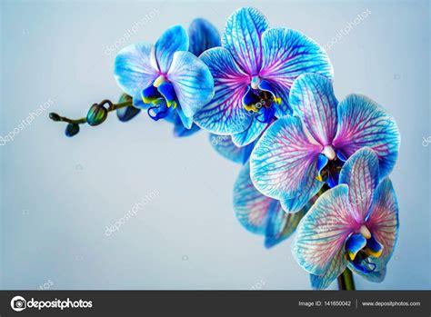 immagini fiori orchidee orchidea brunch di orchidea con i fiori foto