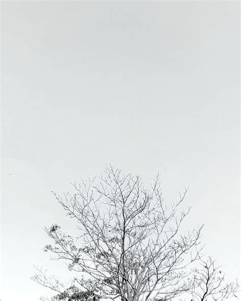 wallpaper gambar latar putih contoh gambar latar