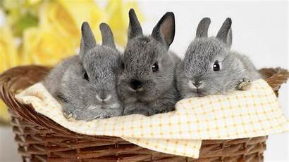 Rabbit Three Wallpapers Animals Rabbits Bunnies Animal
