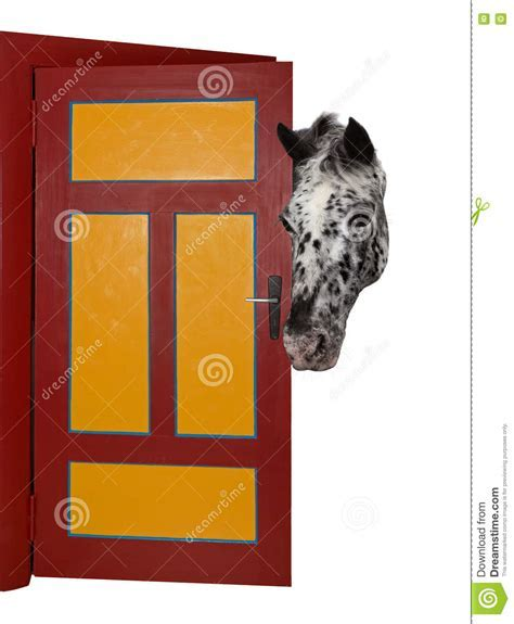 A Cheeky Horse Is Looking Into A Room. Stock Image