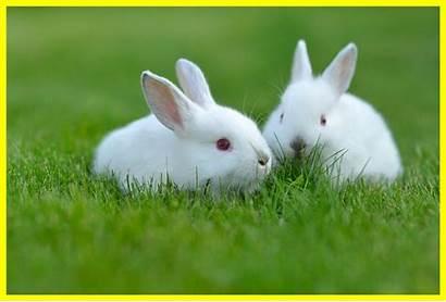 Rabbit Desktop Tanka Haiku Wallpapers Contest Itl