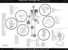Forensic Anthropology Chart
