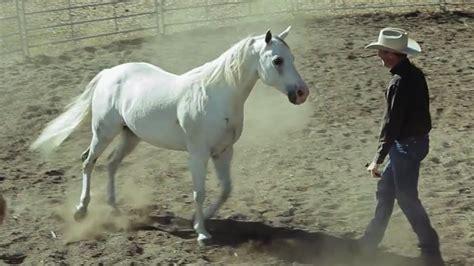horse horses prey predators humans field training aeon jonathan