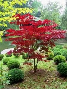 Erable Du Japon Entretien : erable du japon du japon et des fleurs ~ Nature-et-papiers.com Idées de Décoration