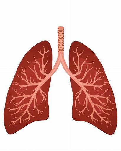 Lungs Lung Respiratory System Clipart Background Human