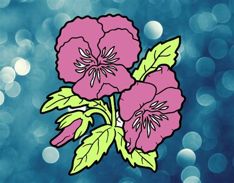 fiori pensiero disegno fiori di viola pensiero colorato da utente non