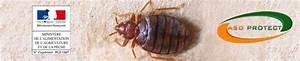 Punaise De Lit Traitement Professionnel : traitement des punaises de lit naturel insecticide ~ Melissatoandfro.com Idées de Décoration