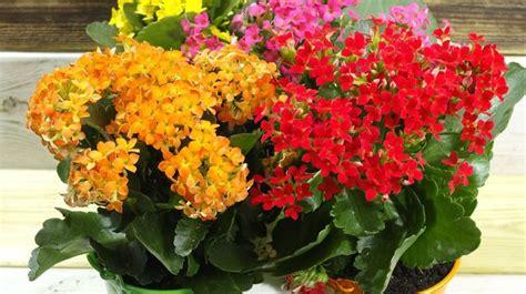 plantes depolluantes entretien facile accueil design et mobilier