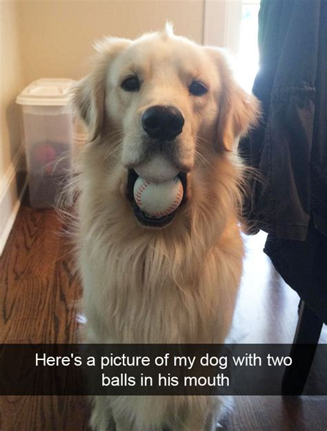 hilarious dog snapchats   impawsible