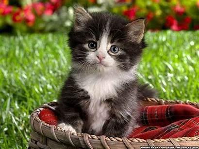 Kitten Kittens Fanpop
