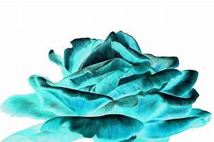 Black and White Wallpapers: Turquoise Rose Wallpaper