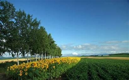 Japan Wallpapers Hokkaido Country Field Landscape