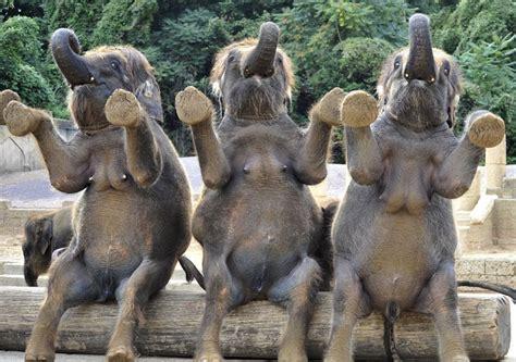 Elephants have very human-like tits. Weird. (sorta NSFW) : WTF