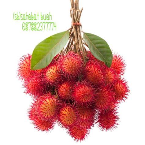 jual buah rambutan binjai 1 iket jakarta utara sb sahabat