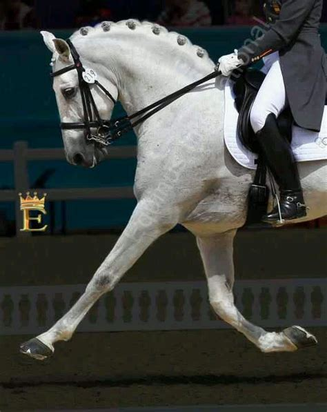 dressage horse andalusian horses equine pretty saddles lusitano luck collect