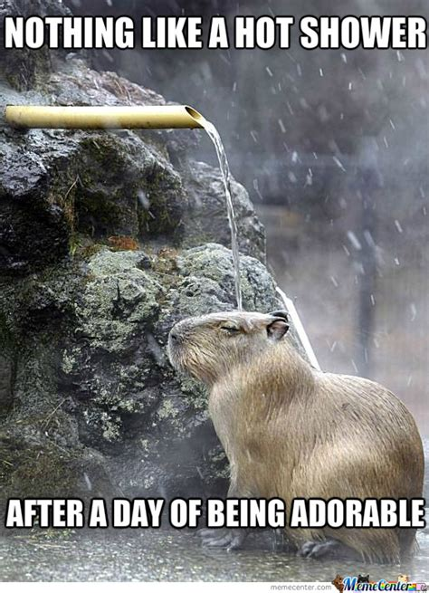 Pictures Of Memes - otter shower by cuteasfuck meme center