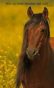 1000+ images ab... Free Horses Quotes