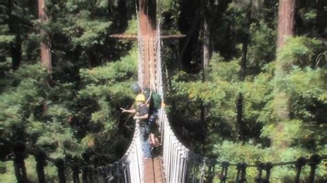 redwood canopy tours youtube