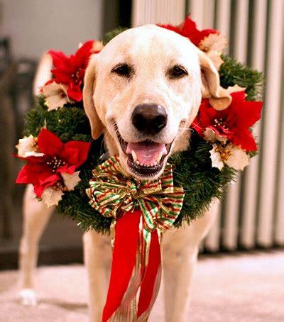 pets guardian merry christmas