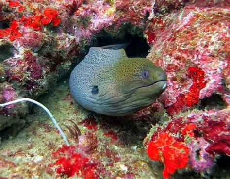 77 Best Marine Life Of Thailand Images On Pinterest