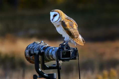 the changing face of birdwatching geographical