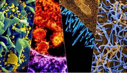 Virus Alive Science Viruses Hiv