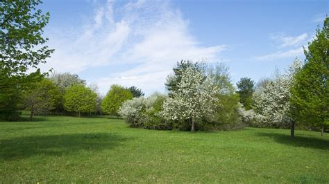tree lawn plant garden round grass woodland weather shrub backyard flower azaleas sky landscape meadow flowers spring yard pxhere nice