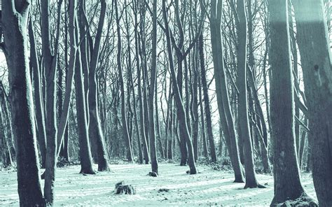 mx cold winter forest snow nature mountain blue wallpaper