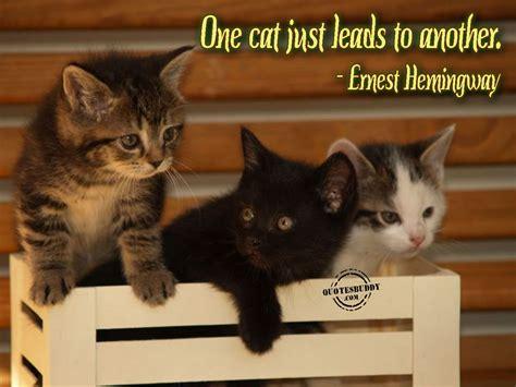 Kitty Cat Cute Quotes Quotesgram
