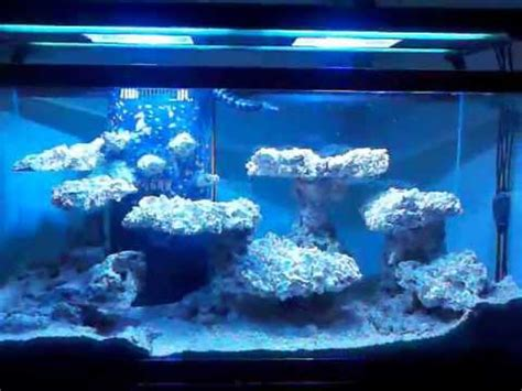 Bonsai Aquascape Reef