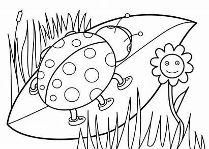 Coloring Pages Ladybug Bug Lady