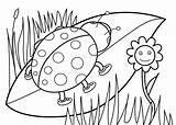 Coloring Bug Lady Ladybug sketch template