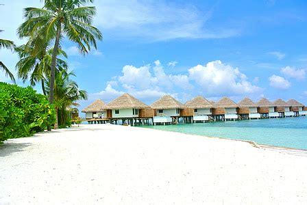 Free photo: maldives, coconut tree, sea, resort, summer ...