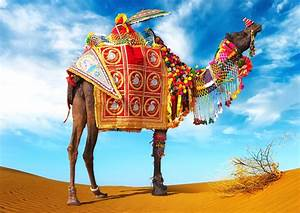 lovely Animal Camel Images Photos And Wallpapers