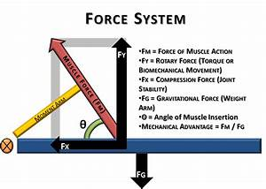 Basic Biomechanics  Moment Arm  U0026 Torque