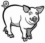 Pig Drawing Line Clipart Boar Wild Burglar Clip Vector Transparent Pigs Farm Animals Lineart Svg Schwein Skull Money Clipartmag Skeleton sketch template