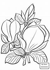 Magnolia Coloring Flower Pages Printable Saucer Campbells Getcolorings Awesome sketch template