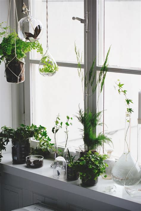 Plants For Windowsill by Windowsill House Plants Ideas Seb Haus Hanging Plants