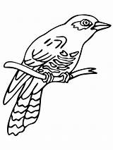 Cuckoo Coloring Pages Common Printable Birds Perched Cuckoos Clock Template Supercoloring Line Recommended Draw Sketch Tracing sketch template