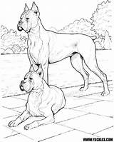 Boxer Coloring Dog Pages Dogs Realistic Puppy Doberman Drawing Pinscher Police Colouring Yuckles Sheets Printable Getcolorings Robocar Poli Designlooter Drawings sketch template