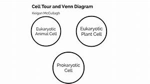 25 Venn Diagram Of Prokaryotic And Eukaryotic Cells