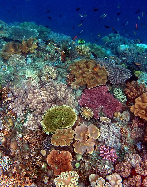 Banana Boat Sunscreen Coral Reef by Your Sunscreen Is Killing The Coral Reefs Science Vibe