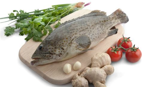 grouper frozen wholesale fillet suppliers fish