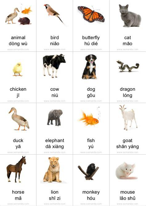 flashcards animals
