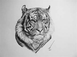 8 Best Images of Drawing Pencil Sketch Of Tiger - Drawing ...
