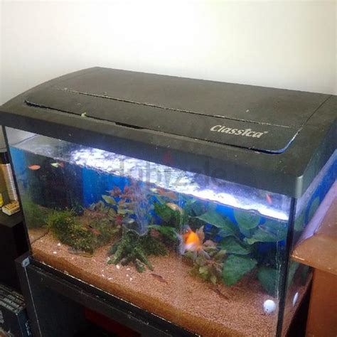 dubizzle dubai aquariums fish reptile supplies aquarium for sale freshwater 63 l with decor